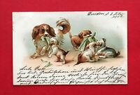 Prägedruck Litho AK HUNDE 1902 Hundemutter mit ihren Jungen Welpen  ( 56645