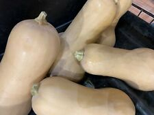 Winter squash seeds, Usa grown, easy, stores well, prepper garden, sufficiency