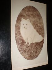 Cdv old photograph white spitz type dog by Turner at Chesterfield c1870s