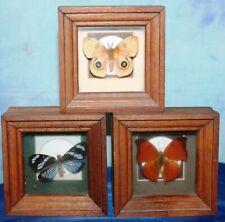 Chuck Kondor Originals - Vintage Butterfly Taxidermy -- LOT of 3