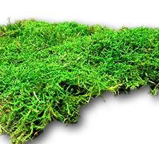 50g islandmoos Finlandia musgo verde oliva-verde naturmoos modellbau decorativas 46851