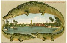 Alligator Border Florida Miami 504 Reflections on the River