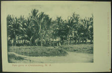 1904 Palm Grove At Christiansborg Gold Coast West Africa RP Postcard