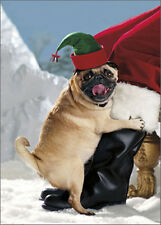 Elf Dog Loving Santa's Leg - Avanti Funny Pug Box of 10 Christmas Cards