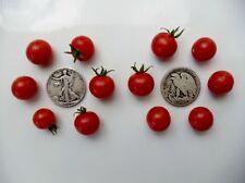 Wild Sweetie - Organic Heirloom Tomato Seeds - Rare, Sweet, Small - 40 Seeds