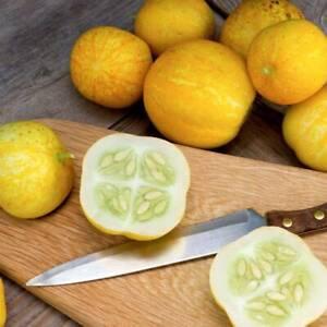 25 Cucumber CRYSTAL LEMON Seeds – Unusual Variety – Easy To Grow – Free Postage