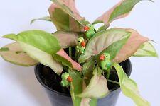 5pcs. Tiny green parrot bird - Miniature Dollhouse FAIRY GARDEN Accessories