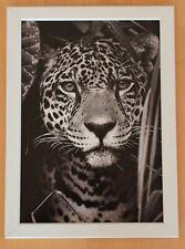 LEOPARD Druck schwarz / weiß  im weißen Holzrahmen - Bild Wohnen Dekoration