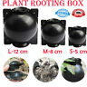 Plant Root Growing Box High Pressure Propagation Ball High Pressure Box Grafting