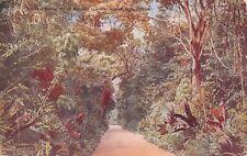 (006) Rare Vintage Postcard of Ceylon