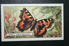 Small Tortoiseshell   Butterfly   Vintage 1930's Illustrated Colour Card