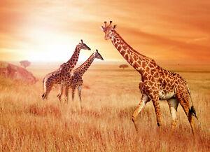 VLIES Fototapete-GIRAFFE-(786)-Tiere Afrika Savanne Natur Steppe Landschaft Baum