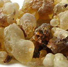 Frankincense Information Kit, PDF Plus Frankincense Tears, History, How to Use