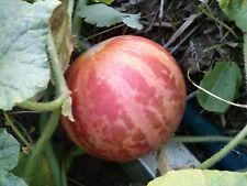Bio-Saatgut, Rarität !!! Armenische Tigermelone -alte historische Sorte
