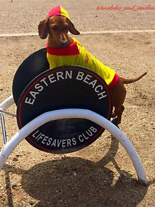 Surf Rescue Lifesaver Dog shirt with cap, x small 20cm, cotton with collar - New