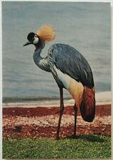 African Birds Crested Crane Postcard Modern – f789