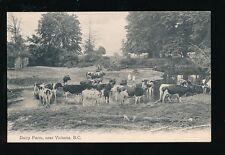FARMING Canada BC Victoria Dairy farm Cattle c1910/20s PPC