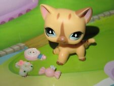 "LPS Pet shop Chat chaton Europeen * Petshop Kitty Cat #886 ""NEUF"" +Accessoires"