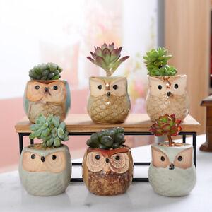 6pcs/set Mini Ceramic Owl Succulent Plants Bonsai Pots Flower Home Desk Decors