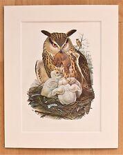 Eagle Owl - Mounted Vintage John Gould Bird Print 1960s Book Plate
