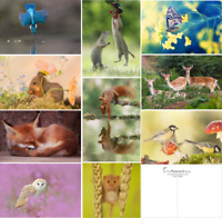 20 Wild Woodland postcards, pack of 10 pretty wildlife animals, new A6 size