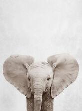 BABY ELEPHANT ART *  QUALITY  CANVAS PRINT