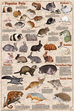 Popular Mammal Pets Laminated Educational Science Animals Chart Poster 24x36