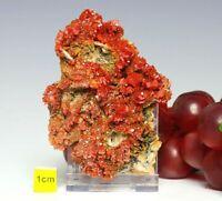 Vanadinite on Barytes Large Crystal Cluster Mineral Specimen - Raw Mineral 134g