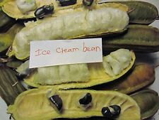 "2 Ice Cream Bean Plants 12"" in  2 Pots Inga feuilleei Tropical Fruit Tree Plant"