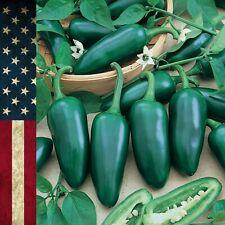 Seeds 30+ Jalapeno Pepper Non-GMO Vegetable