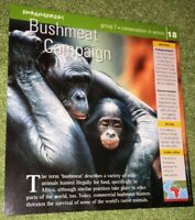 Endangered Species Animal Card-Conservation In Action-Bushmeat Campaign #18