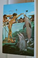 C 1960 Performing Porpoises At Miamis Seaquarium Miami Florida Postcard