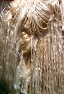 Suri Llama fiber. Aprox 1 pound of raw Fleece. RARE. Fine. Fleece Fiber Wool.