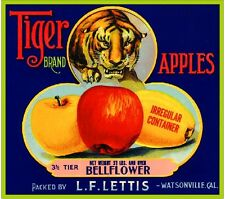 Watsonville California Tiger Apple Fruit Crate Label Art Print