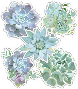 CD 120555 School Girl Style Succulents Cut Outs Classroom Decorations
