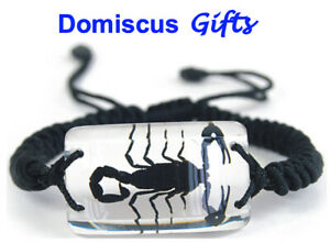 NEW! Real INSECT Black SCORPION BRACELET Rectangular Clear Jewelry PENDANT