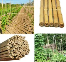 More details for heavy duty strong bamboo canes garden plant support trellis pole stake sticks ne