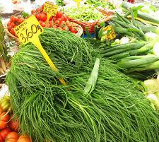 SALZKRAUT 20 Samen Salsola Soda AGRETTI  Salat Spinat
