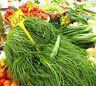 SALZKRAUT 50 Samen Salsola Soda AGRETTI  Salat Spinat