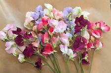 Eterno artificial flores de seda 12 tallos Surtido Dulce guisantes Shabby Chic