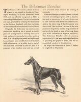 1942 Antique DOBERMAN Dog Art Print Edwin Megargee Doberman Pinscher Print 3829f