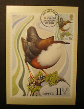 GB / Great Britain1980: amtliche Maximumkarte Dipper / Wasseramsel m. MN 818