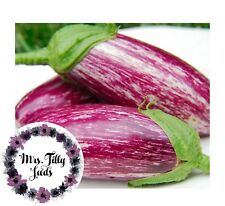 Dürr Auberginen Black Beauty tiefviolette Frucht ca 35 Samen  Balkon Freiland