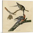 ARTCANVAS Passenger Pigeon Canvas Art Print by John James Audubon