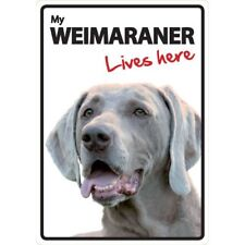 Weimaraner Lives Here A5 Plastic Sign