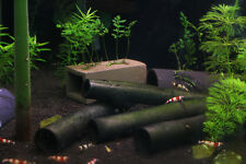 Bamboo Shelter x10 - Cherry Crystal Red Shrimp Pleco Aquarium