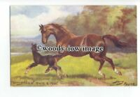 an0942 - Thoroughbred Mare/Foal No.9138, Artist - N.Drummond - Postcard - Tuck's