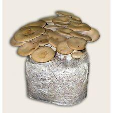 Substrato Per Funghi