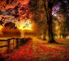 COUNTRY LANDSCAPE AUTUMN TREES RED LEAVES SUNSET WALL ART CANVAS PICTURE PRINTS