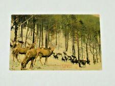 Animal postcard Deer WOODS SNOW  Germany Vintage W/STAMP